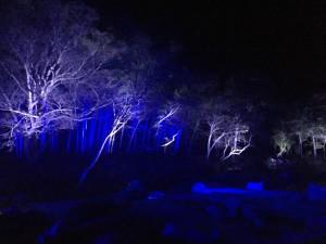 雪舟庭 クリスマスライトアップ